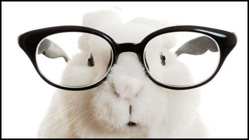 rabbit-with-glasses-on-pic